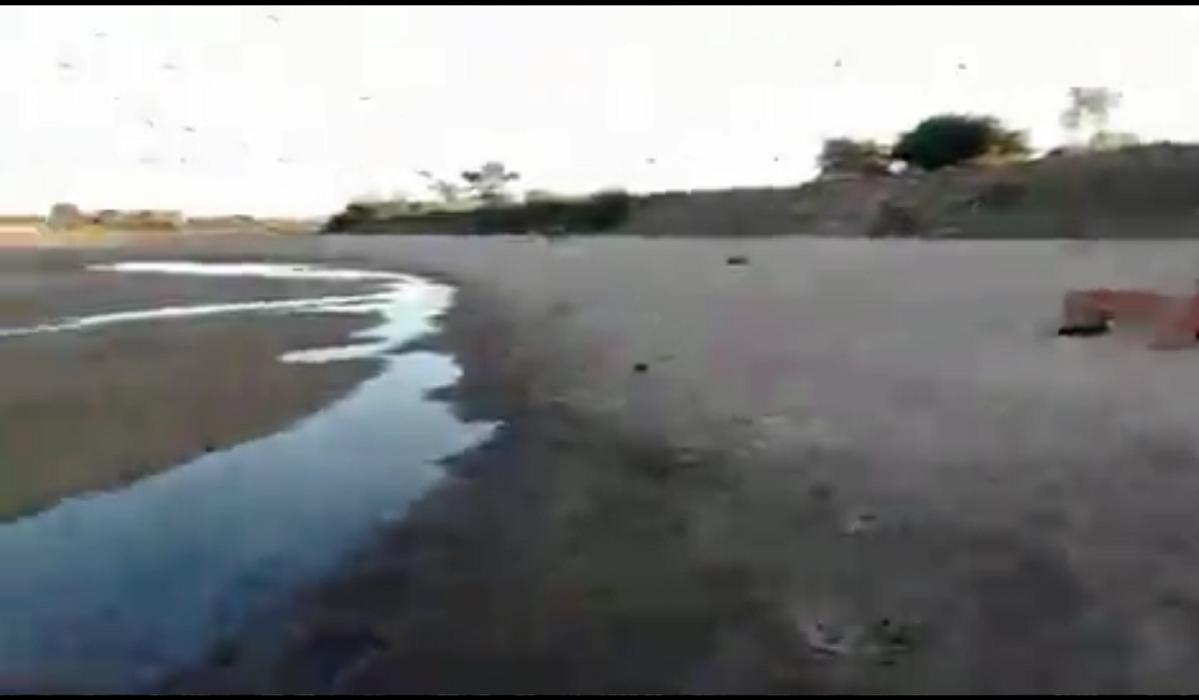 Impresionante: Se secó el riacho donde se largaba la Fiesta Nacional del Surubí